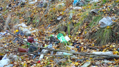 Garbage on forest glade at autumn day Footage