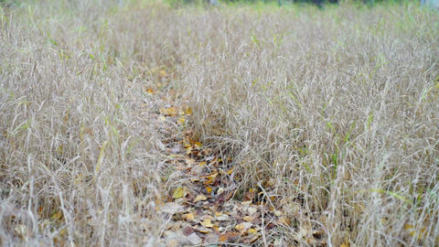 Path with bright leaves through the autumn field Stock Video Footage