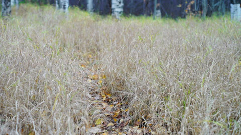 Path With Bright Leaves Through The Autumn Field stock footage