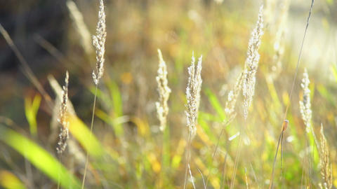 Dry grass on field in autumn Footage