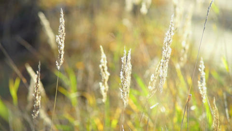 Dry grass on field in autumn Stock Video Footage