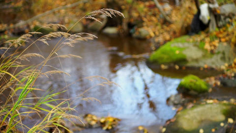 Reflection in forest river at autumn day Stock Video Footage