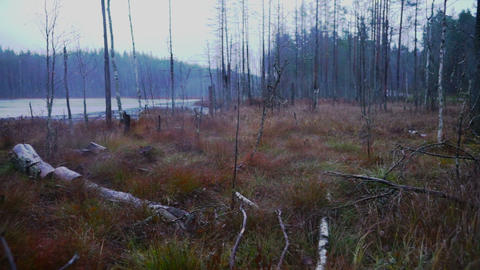 Autumn forest and river in rainy day Stock Video Footage