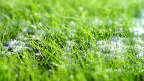 Green grass with white snow close-up Stock Video Footage