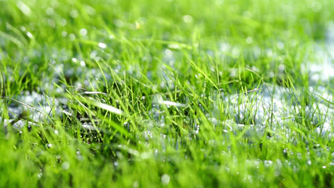Green grass with white snow close-up Footage