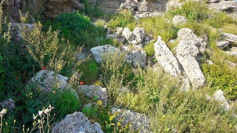 Wild flowers pushing through ruins Footage