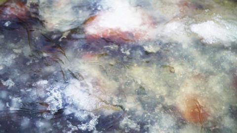Orange stones under ice, Lososinka river, Karelia Footage