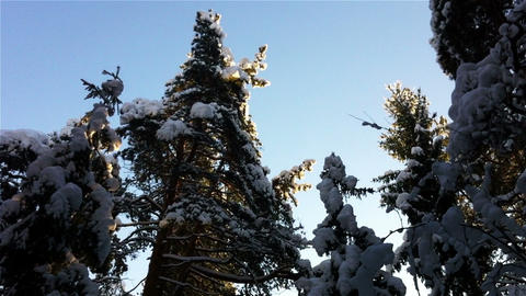 Winter Forest In A Sunny Day stock footage