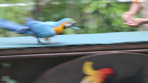 parrot show in bird park Footage