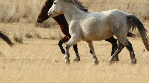 HD Herd of Horses Runs Through the Autumn Steppe Footage