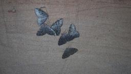 butterflies wintering in the cave (Geometridae) Footage