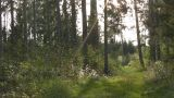 Forest Footage