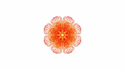 orange rotation flower lotus... Stock Video Footage
