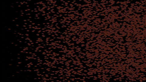 Red blood cells,plankton,Ants,cockroaches,insects,rice,beans,dust,Design,pattern,symbol,dream,vision Animation