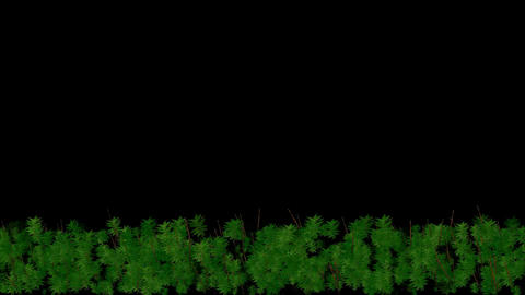 Animation of tree is... Stock Video Footage