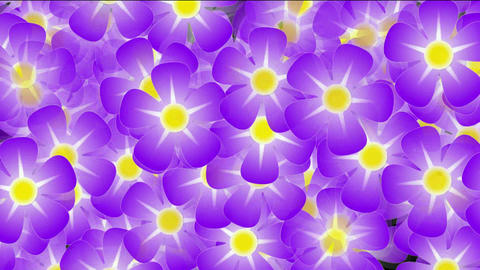 purple wild flower background,violet,flicker,Festivals,bloom,lush,prosperous,welcome,creativity,crea Animation