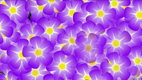 purple wild flower... Stock Video Footage