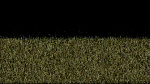 fresh spring grass,marsh,wetlands,crops,wheat,barley,plants,relaxation,recreation,material,particle Animation
