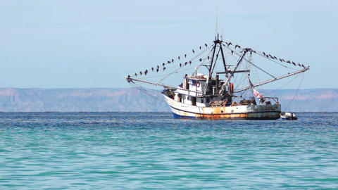 Old Fishing Boat With Many Seabirds Footage