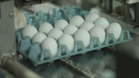 egg on production line Footage