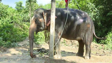 Elephant washing Footage