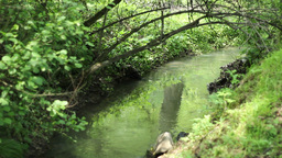 Arched Branch over Tiny River Footage