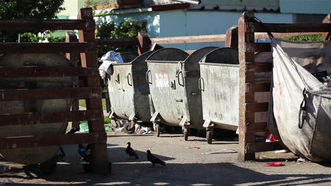 Birds And Garbage At Dumpsters stock footage