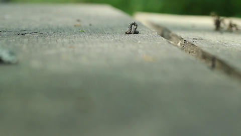 Cankerworm On Wood stock footage