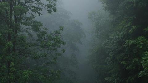 Dark Fog in Forest Footage