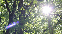 Dazzling Sunshine Through Canopy Footage