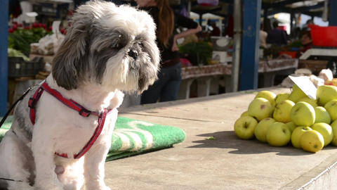 Dog And Apple Stack At Market stock footage