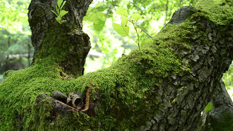 Green Moss on Tree Footage