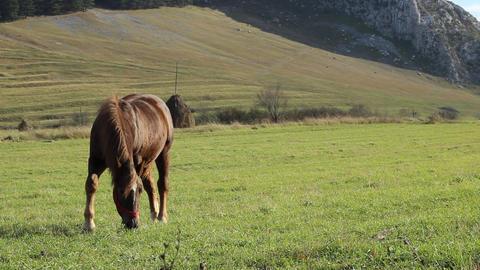 Horse on Windy Grassland Footage