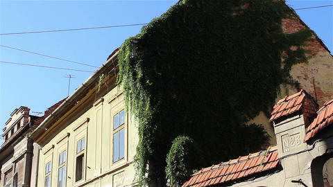 Ivy on Old House Walls Footage