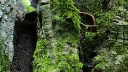 Millipede on Tree Moss Footage