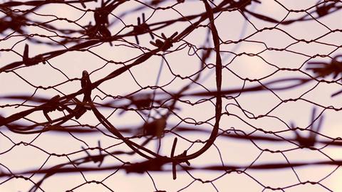 No Escape Barbed Wire Live Action