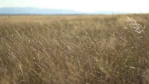 Parched Plain On Sunny Afternoon stock footage
