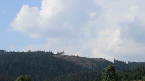 Pine Deforestation Timelapse Footage