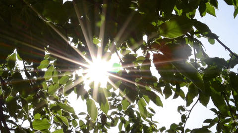 Sun Glitters Through Leaves Footage