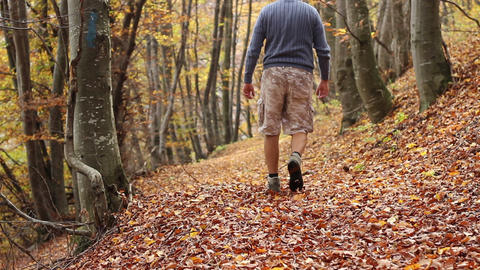 Trekking Through Autumn Forest Footage