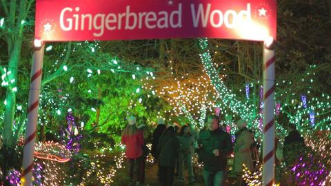 Christmas holidays - Canadians at Vandusen festiva Footage