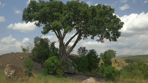 AERIAL: Wild African safari Footage