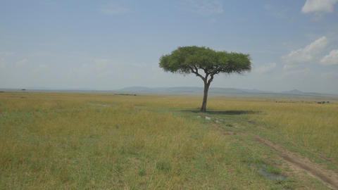 AERIAL: Solitude tree in African savannah Footage