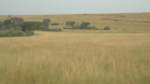 AERIAL: African savannah Footage