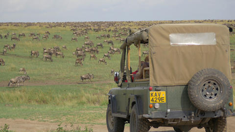 Tourists in a jeep looking at herds migration Footage