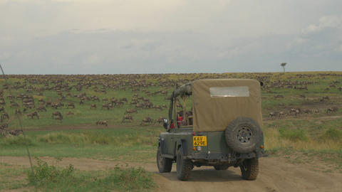 Tourists on a game drive observing the great migra Footage
