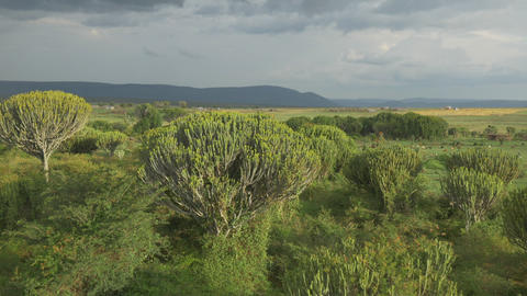AERIAL: Lush landscape in Africa Footage