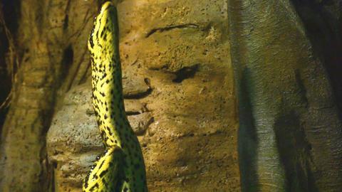 Snake in the serpentarium Footage