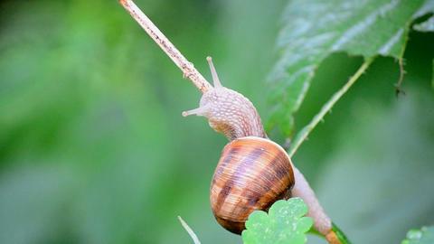 snail Footage