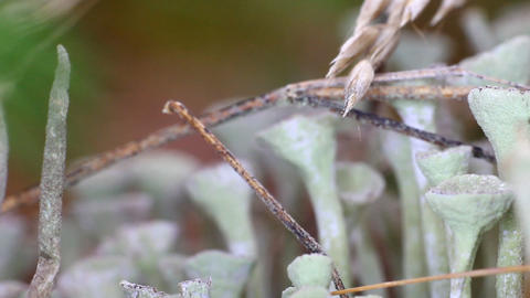 Beautiful lichens in the form of glass Footage